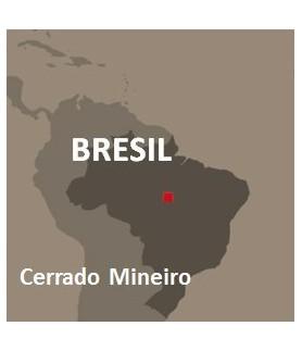 Monoarabica Brésil x18 -...